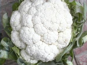 BRASSICACEAE Brassica oleracea, gr. Botrytis (Chou-fleur)