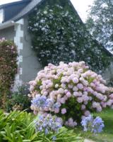 Hydrangea-Et-Pelargonium